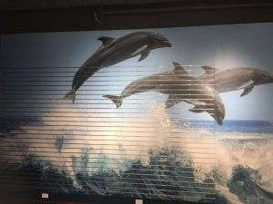 Aquarium Dolphin Slatwall Graphic